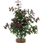 Fluval - Planta Decorativa Aqualife Plant Bacopa